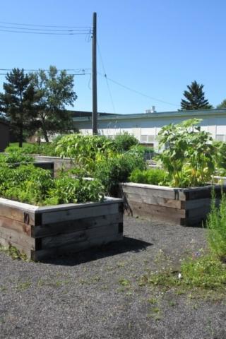 Community Garden 2020 2
